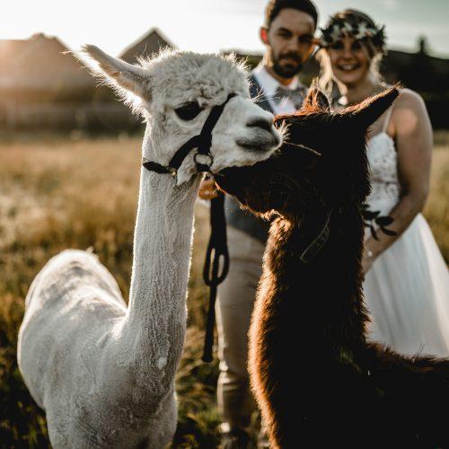 J&T-Hochzeit726